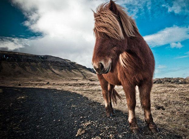 12 Great Online Tutorials on Wildlife Photography