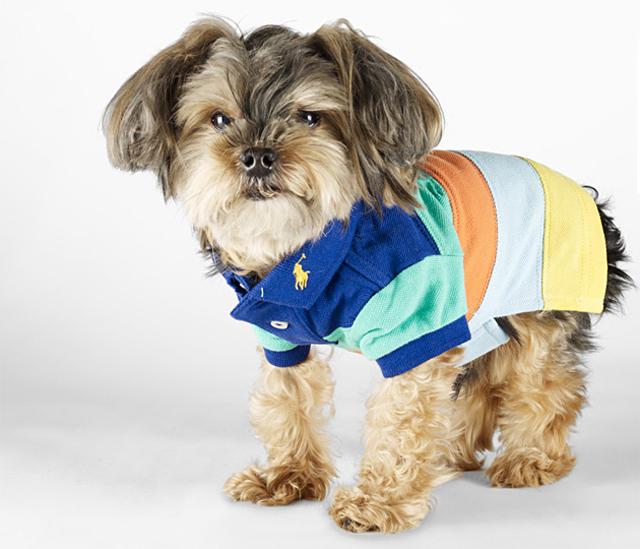 A little dog wearing a shirt