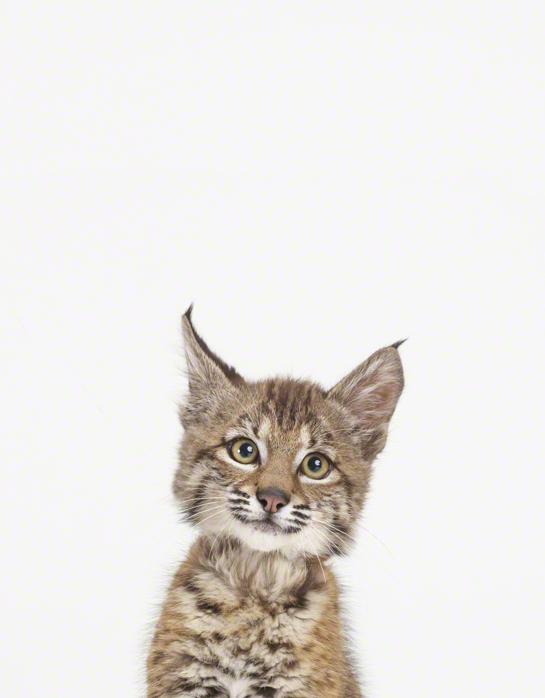 LittleDarlings - Cat