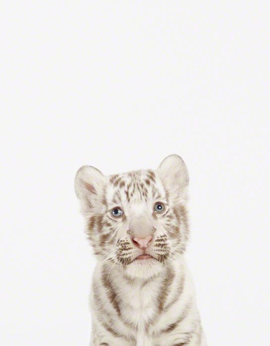 LittleDarlings - White Tiger