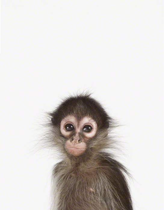 LittleDarlings - Monkey