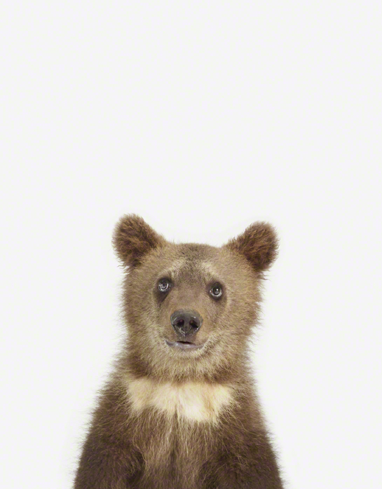 LittleDarlings - Bear