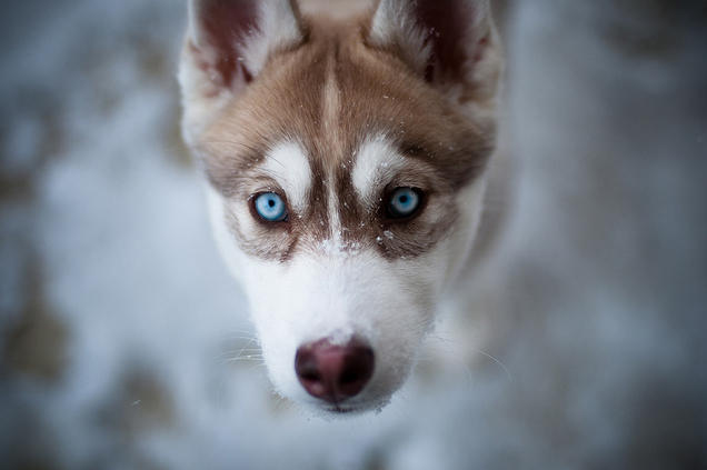 photo of a wolf in winter