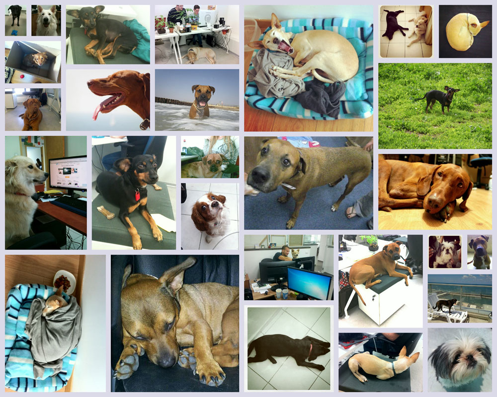 Wix Dogs Collage