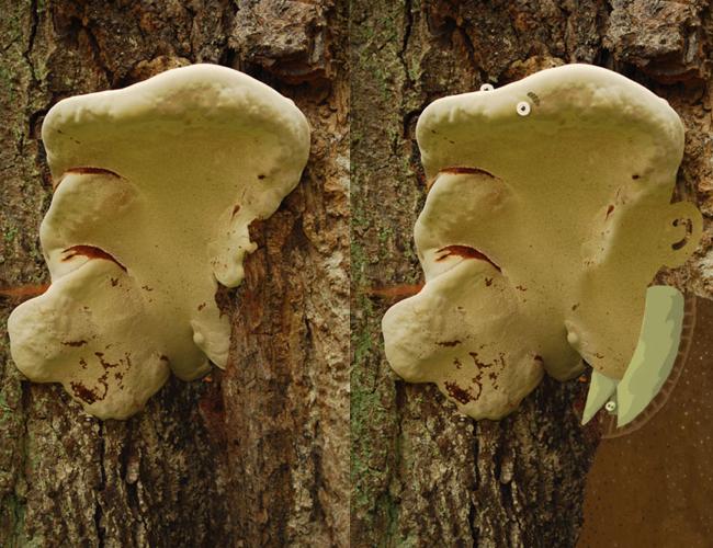 """""""Mr. Fungus"""" by Tineke Meirink"""