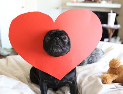 Make your pet wear a heart