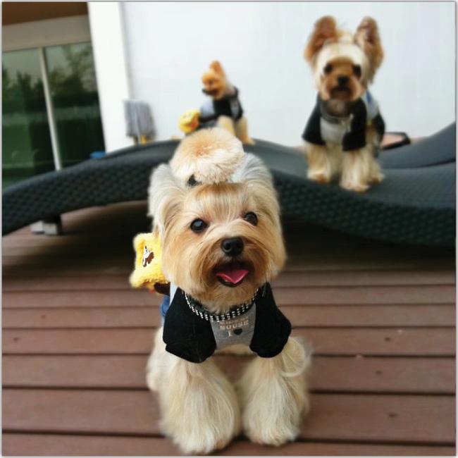 Top Pets of Instagram