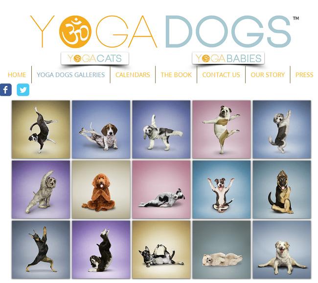 Yoga Dogz