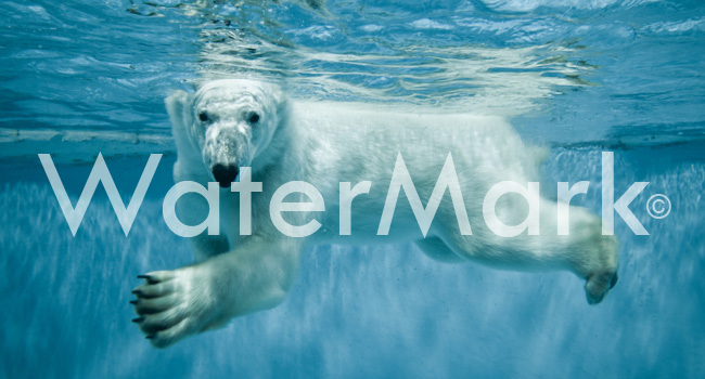 How to Easily Watermark and Protect Your Images10