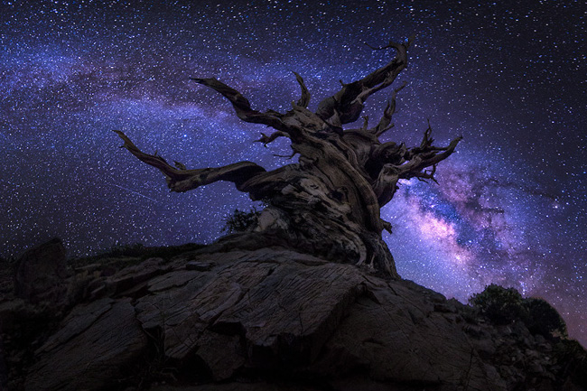 Night Sky at Sierra High Country by Jesse L. Summers