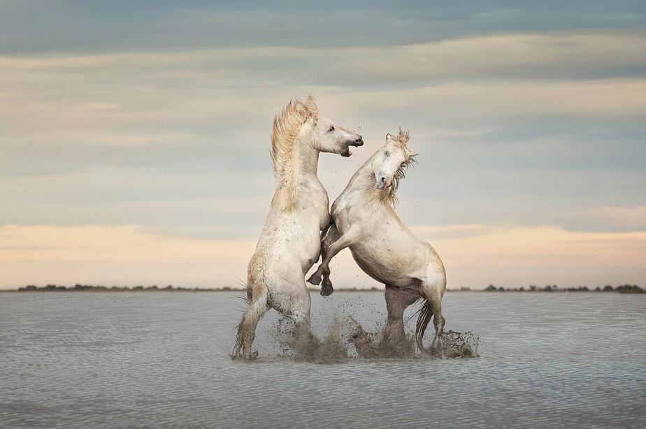 Wild Horses - Wix Photography