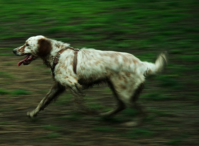 Mastering Mastering Motion Blur: A Photo By Ivan Dervisevic