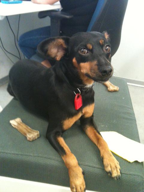 Wix Dog # 11: Betsy
