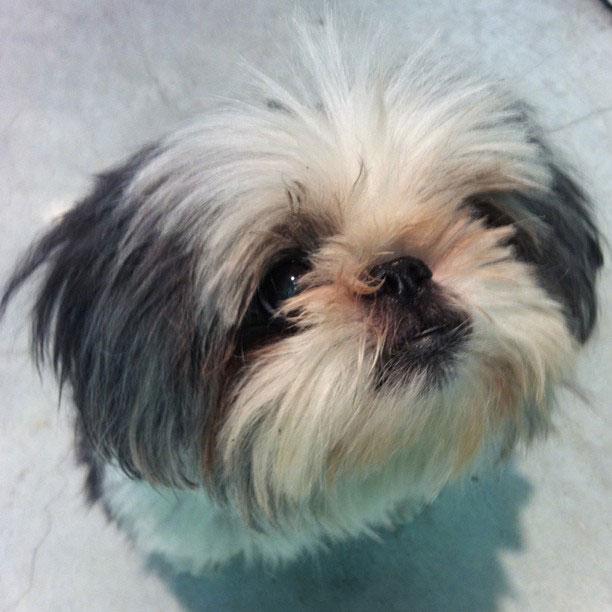 Wix Dog # 10: Kuni