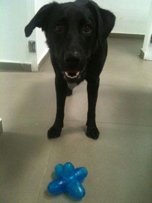Wix Dog # 9: Luna