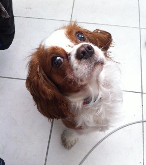 Wix Dog # 8 - Cava
