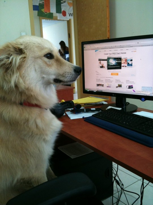 Wix Dog # 5: Kafka