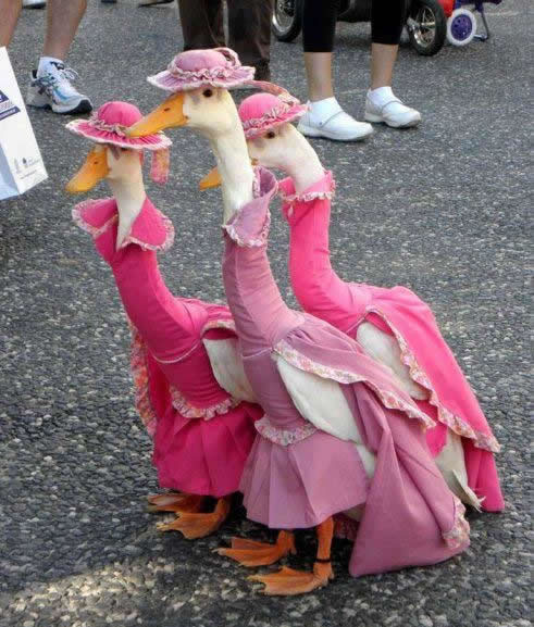 ducks in pink dresses