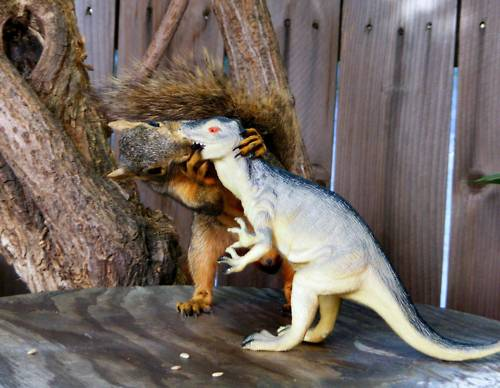 Squirrel kissing a toy