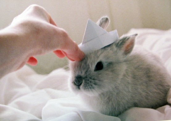 Bunny with sailor hat