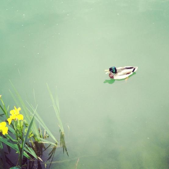 Coolest Pinterest Boards: Green