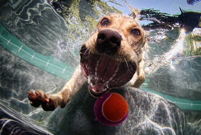 Perfectly Timed Photos diving dog