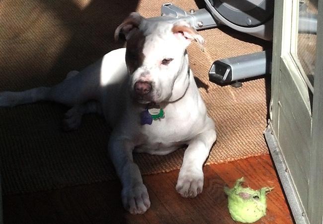 Milo - Wix Top Dogs