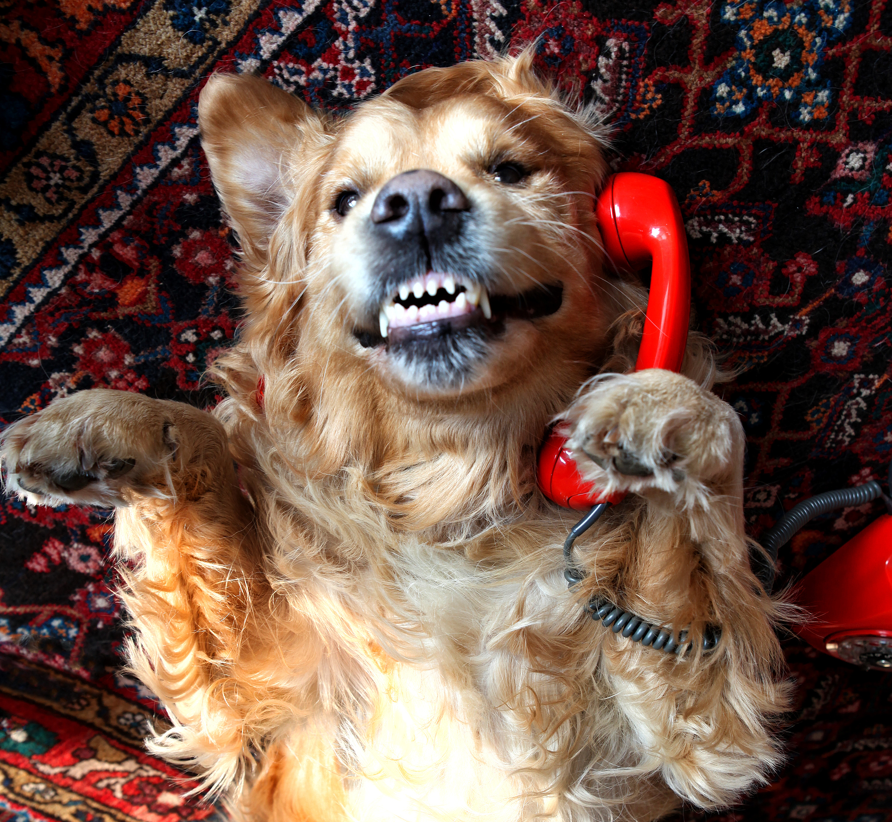 Worst stock picture: dog on the phone
