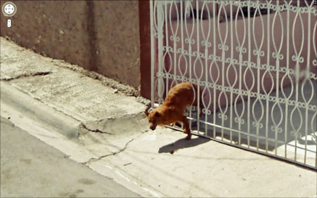 Weird Google Street View: Dog stuck in a fence