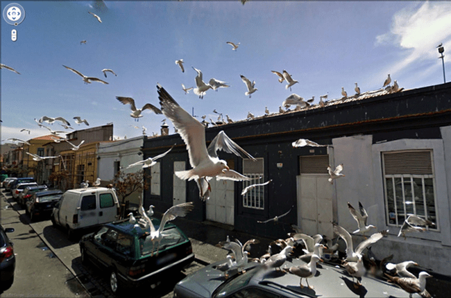 Weird Google Street View: A Sea of Seagulls