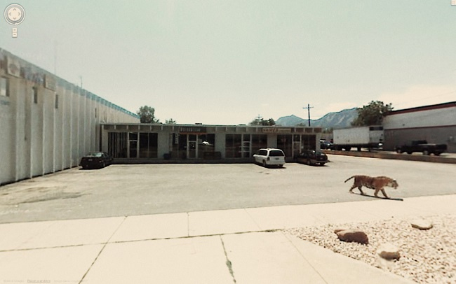 Weird Google Street View: Tiger on the Loose