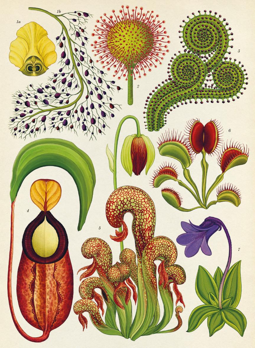 Katie Scott Botanicum