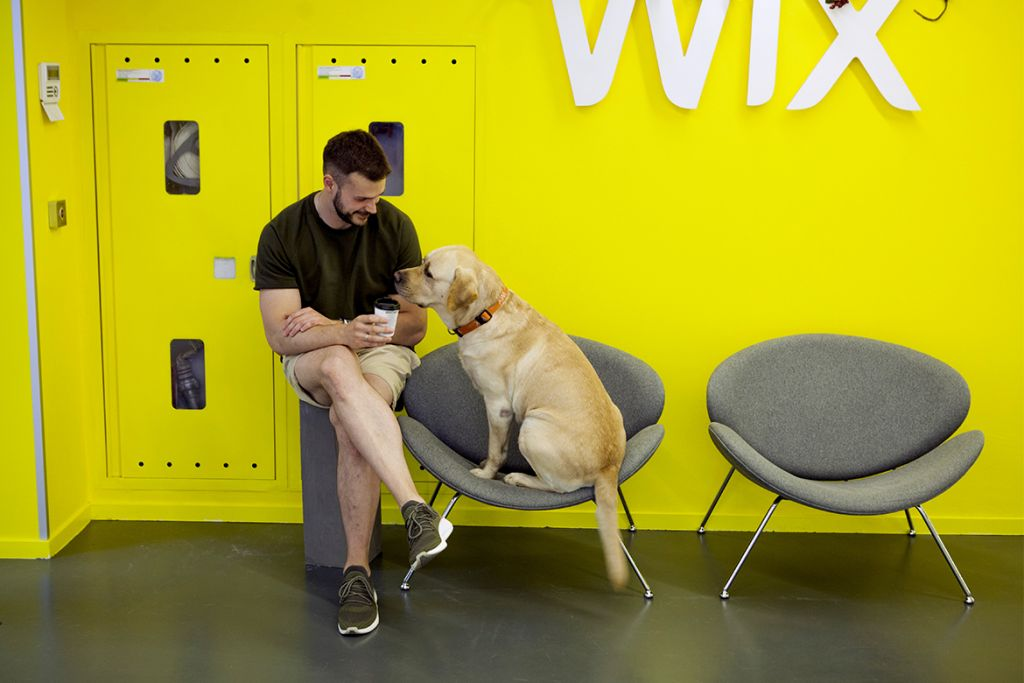 Yellow designed office with dog