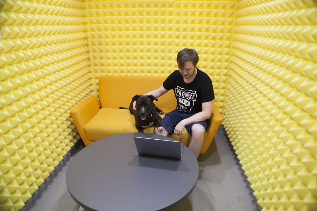 Yellow office in high tech company with dog