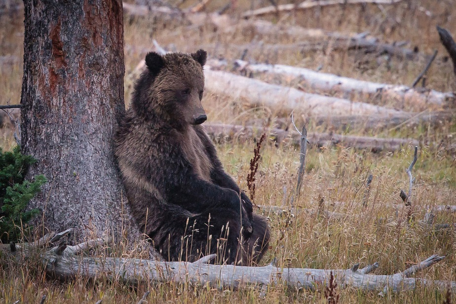 thoughtful bear by wix photographer JA Dupont