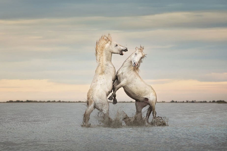 horses of camargue by wix photographer Tuzlukova