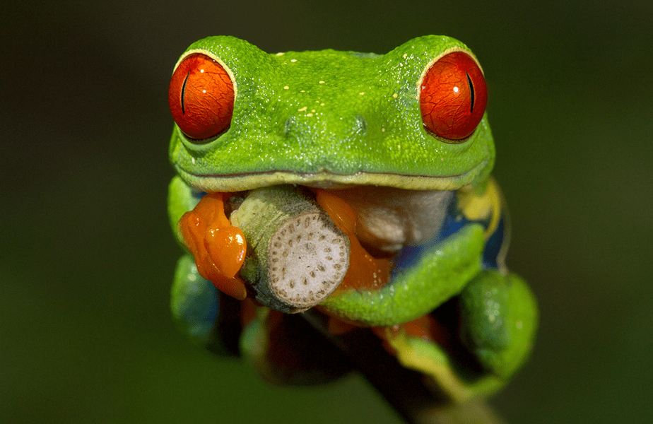 macro photo of a green frog