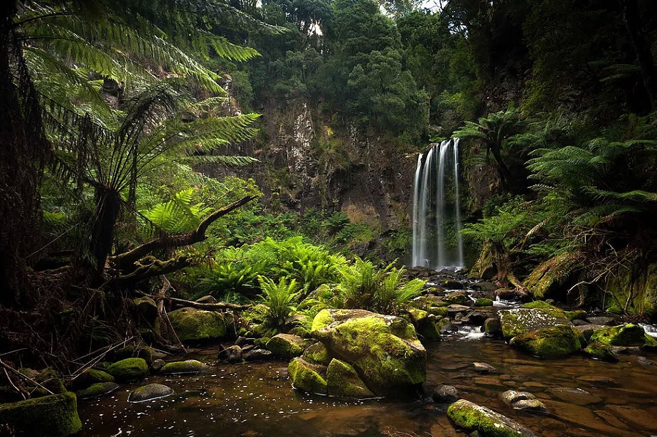 Lush vegetation of Australia by Wix Photographer David Rochas