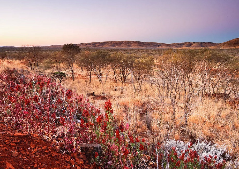 Beautiful desert of Australia by Wix Photographer David Rochas