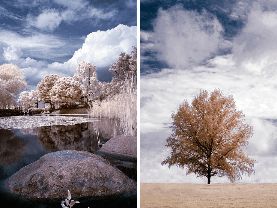 Beautiful Infrared Photography of Trees by Wix Photographer Nathan Hayag