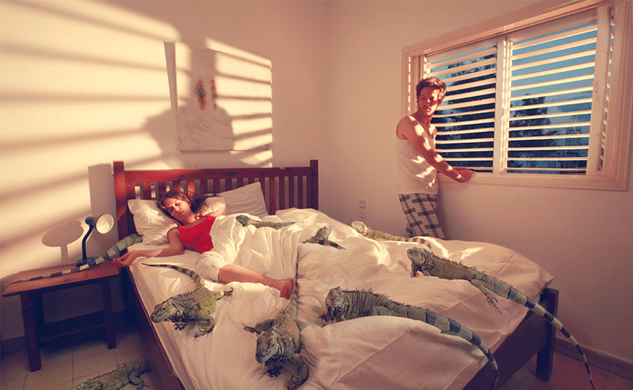 man and woman in a bedroom with iguanas