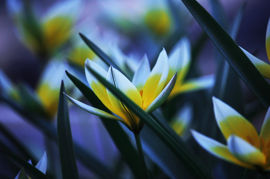 beautiful macro photo of flowers by wix photographer meg farrar