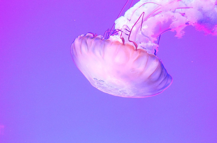 beautiful macro photo of a jellyfish by wix photographer meg farrar