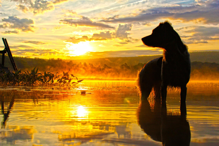 dog in front of the lake at sunrise