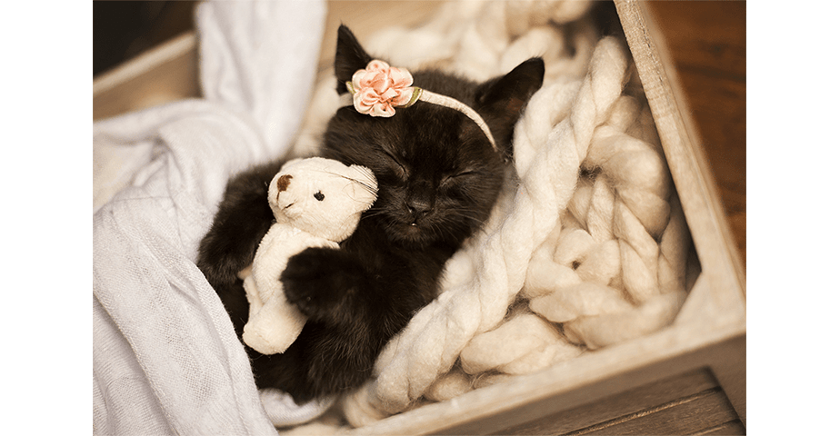newborn photo of a kitten