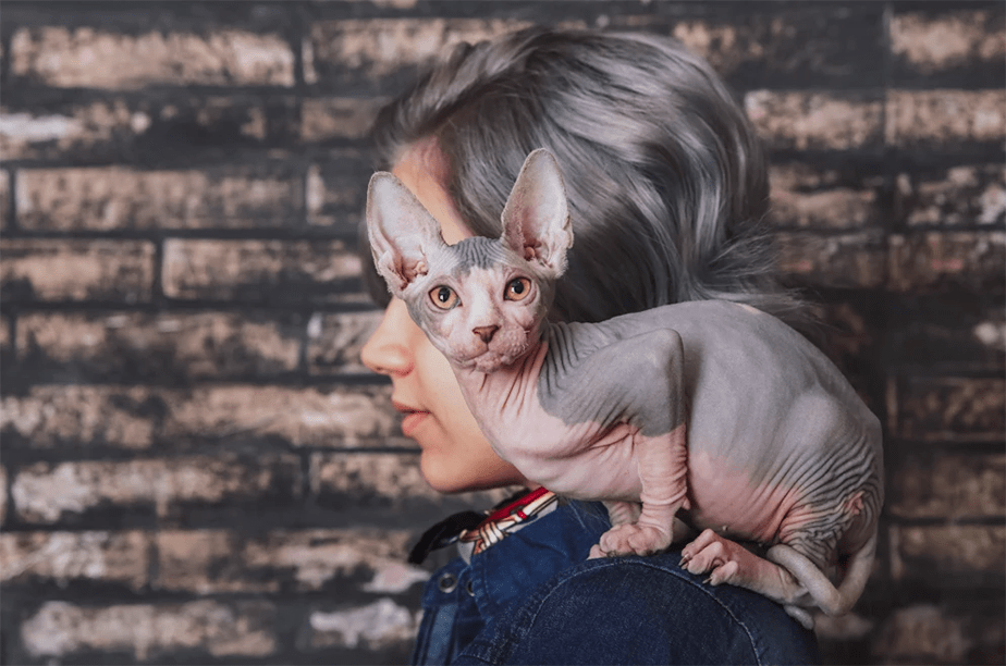 Wix Pet photography by Javier Retales Botijero