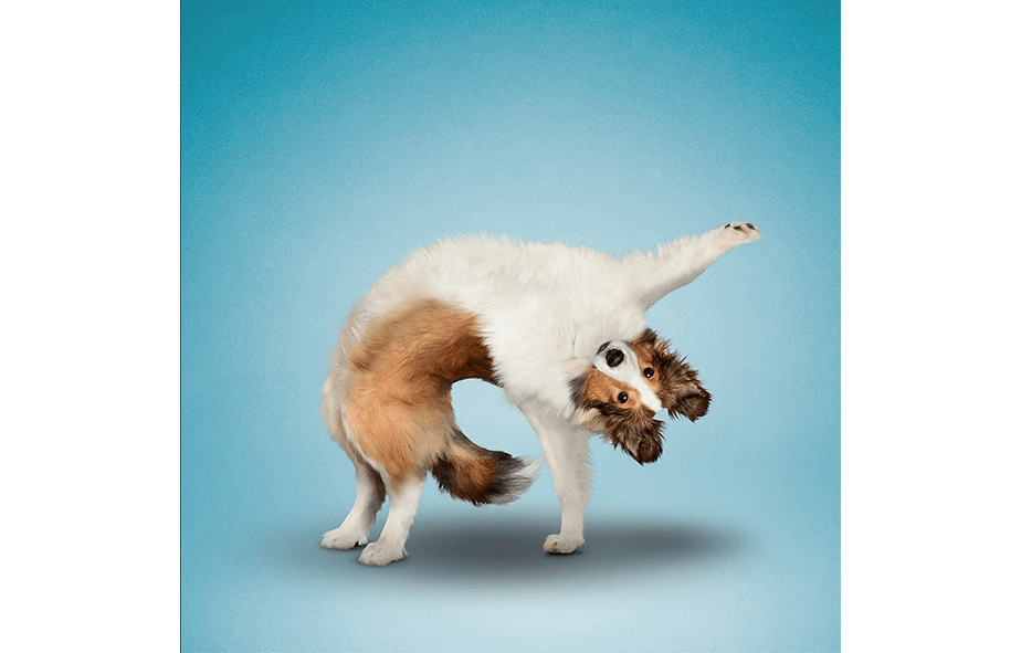 Wix Pet photography by Yoga Dogs
