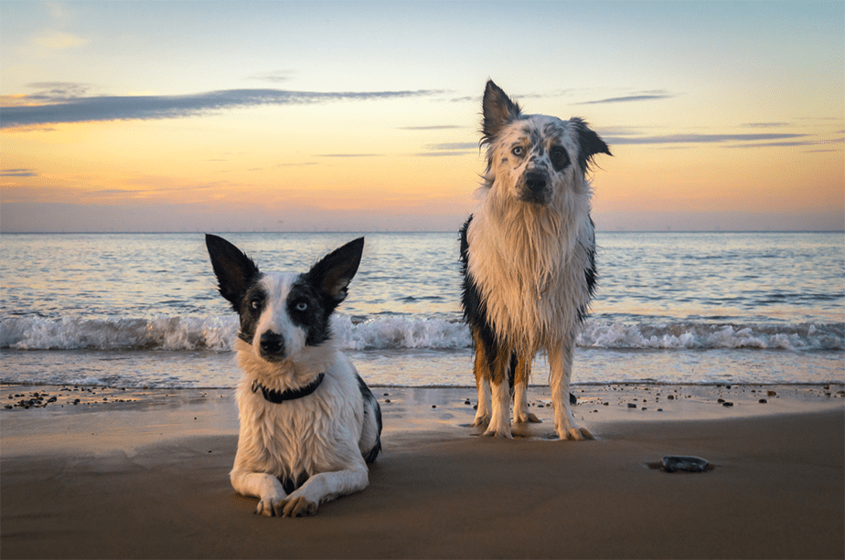 Wix Pet photography by Brad Damms