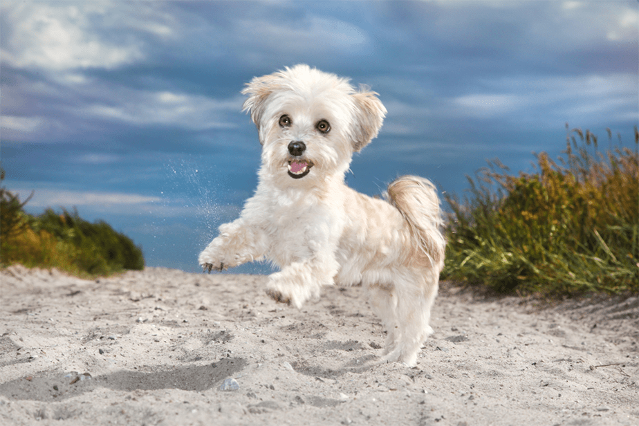 Wix Pet photography by Ramona Bach