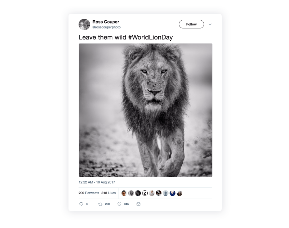 Tweet of a black and white photo of a lion